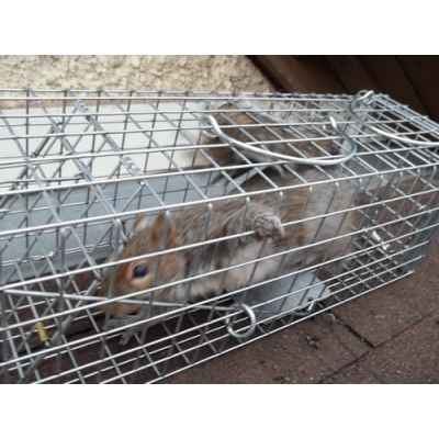 Animal Evictions,Animal Removal,Animal Trapping,Cage Traps,hardware,wildlife control,wire mesh,wire products